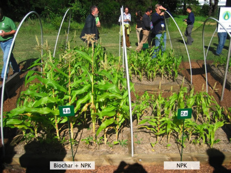 Comparison of use of fertilizer with (left) and without biochar (right) additions (BEST Energies) (